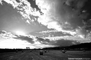 Campi di grano - Sigma 10 20 Nikon